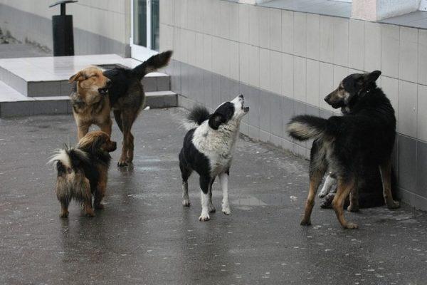 собаки-агрессив