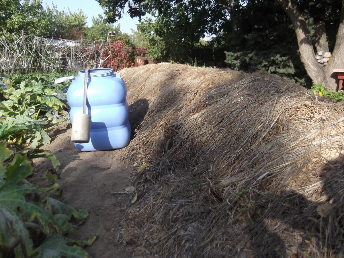 Бочка с настоем (забродившей падалицей) стоит рядом с выложенными на компост сорняками, чтобы было удобно их поливать.